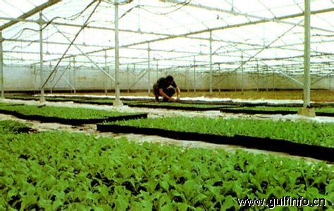 沙特大力促进农业发展