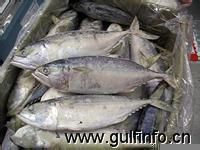 巴基斯坦渔业产品出口大幅增长