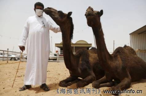 沙特卫生部警告:因为Mers病毒,请远离骆驼