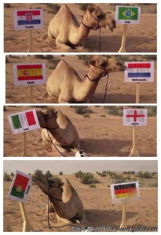 4场全中 迪拜骆驼成新章鱼保罗