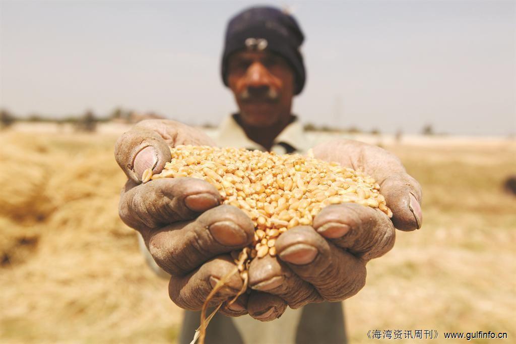 埃及商品供应总局计划在10天里招标购买小麦