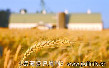印度政府决定向公开市场抛售1,000万吨国储小麦