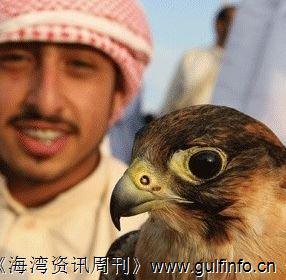 成为阿联酋国家象征的动物—隼