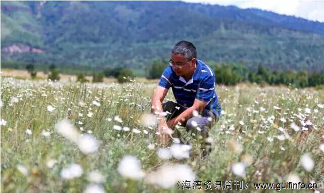 """中国农业技术为肯尼亚""""播种""""希望"""