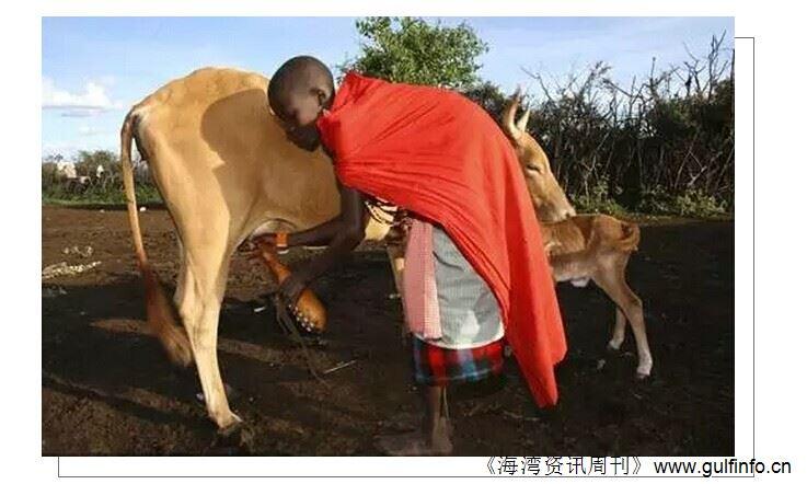 """非洲乳业""""自给""""还有很长的路"""
