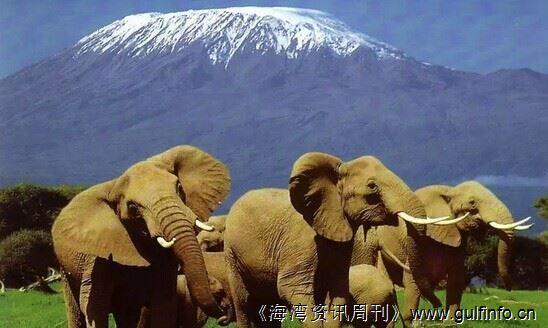 大象是纯素食主义者吗?