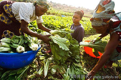"""尼日利亚: 农业""""走进""""尼日利亚大有作为"""