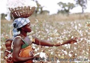 中国将在非洲贝宁、马里等四国推广种植棉花