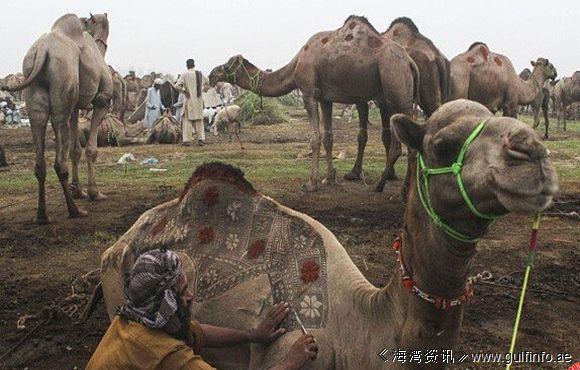 """理发师在骆驼身上""""作画"""",简直震撼眼球!"""