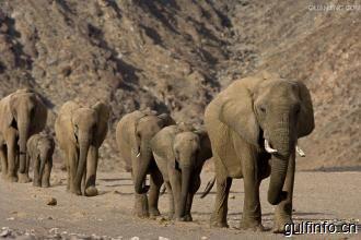 """非洲国家""""象满为患"""" 将提议解禁象牙贸易换钱"""