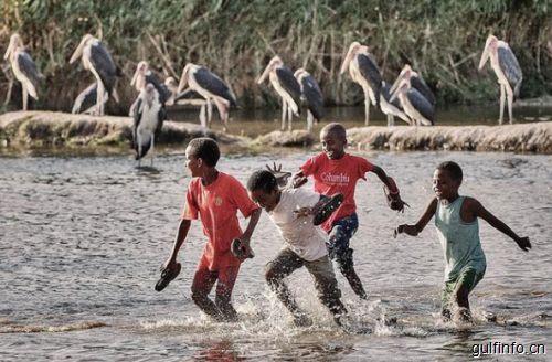 非洲家禽消费不断上升,政府大力促进家禽工业化