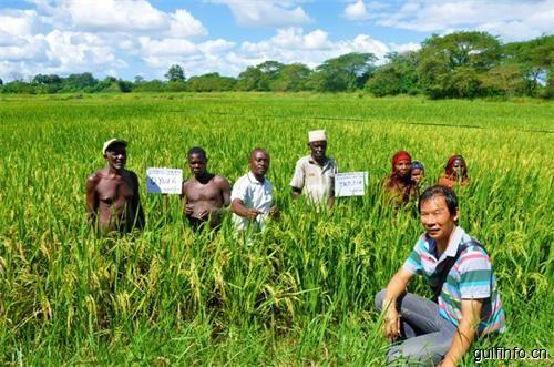 中国农药工业协会聚焦埃塞农药化肥市场,前景广阔大有可为!