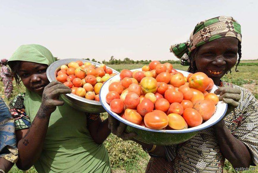 尼日利亚番茄酱进口再出严政  每吨将额外征税1500美元