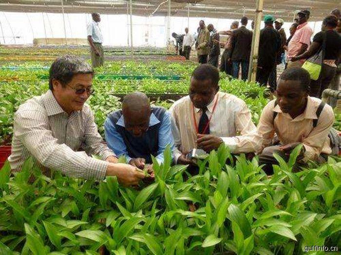 农用化工业是肯尼亚最富前景的产业领域之一,你知道它的发展现状与投资前景吗?