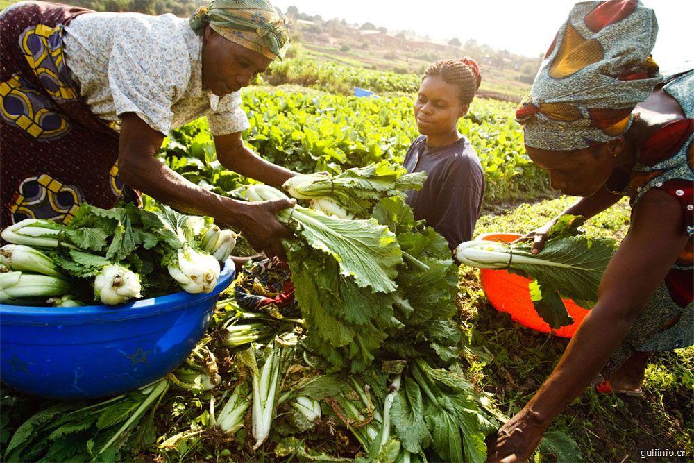 在农业政策支持下尼日利亚农用土地需求大涨