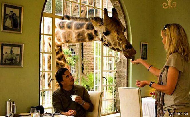 肯尼亚的长颈鹿庄园 探寻内罗毕野性世界