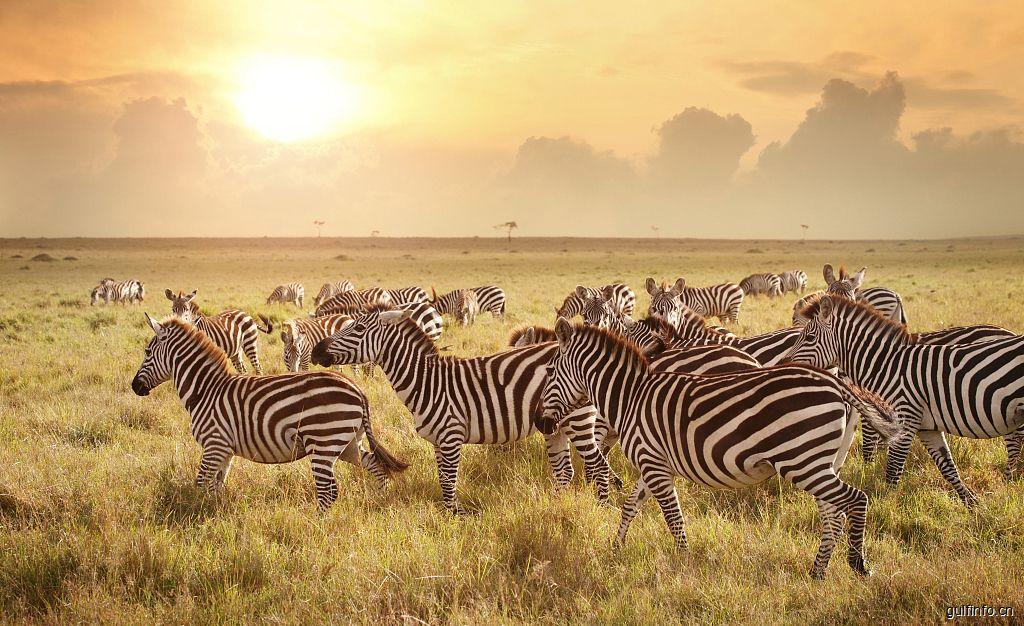 最新肯尼亚电子签证办理攻略