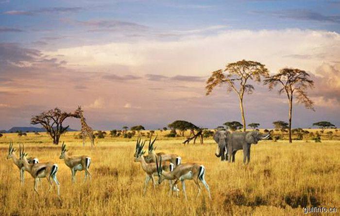 南非考虑对中国实行免签,望促进旅游产业发展