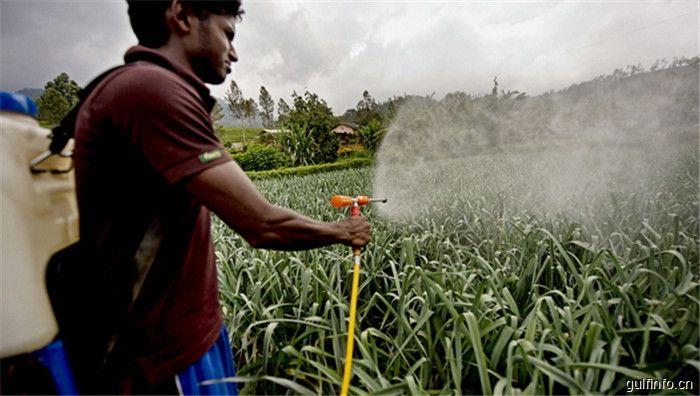 非洲化工--农药市场分析