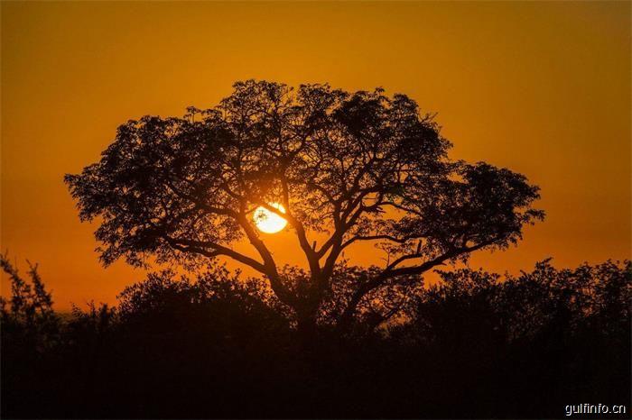 舌尖上的坦桑尼亚:带你了解非洲大地的美食