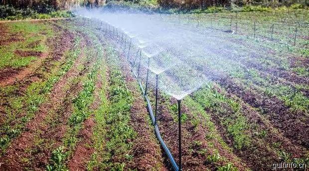 摩洛哥大手笔发展地区农业 启动高达46亿人民币资金