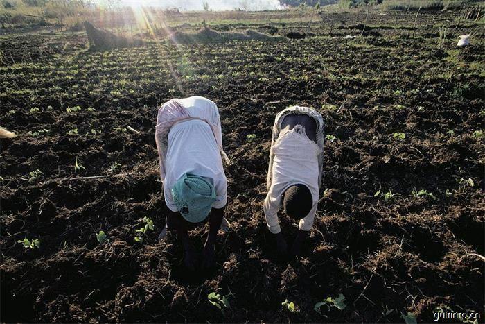 坦桑尼亚向化肥进口敞开大门