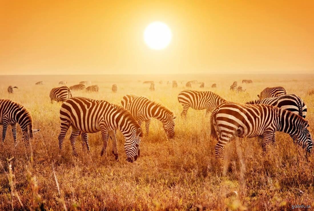 我国赴非洲游客量年增速达50%