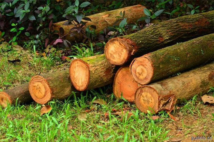 对认证木材的需求增长将成为非洲木材一个重大挑战