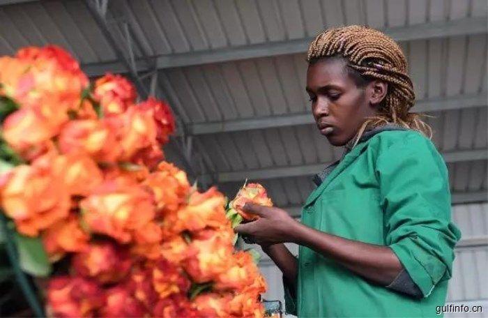 肯尼亚玫瑰香飘中国