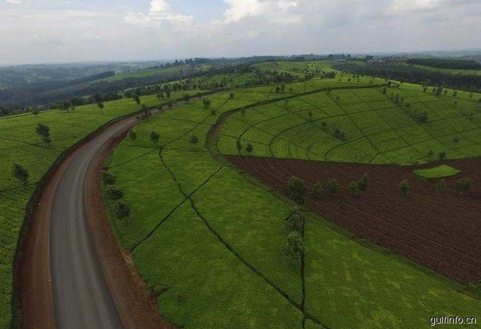 这条中企改造的茶园公路,有你不知道的非洲之美