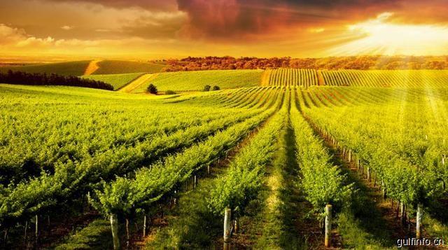 中非农业合作现状与建议
