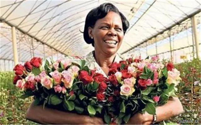 埃塞俄比亚欲打造花卉产业集聚区