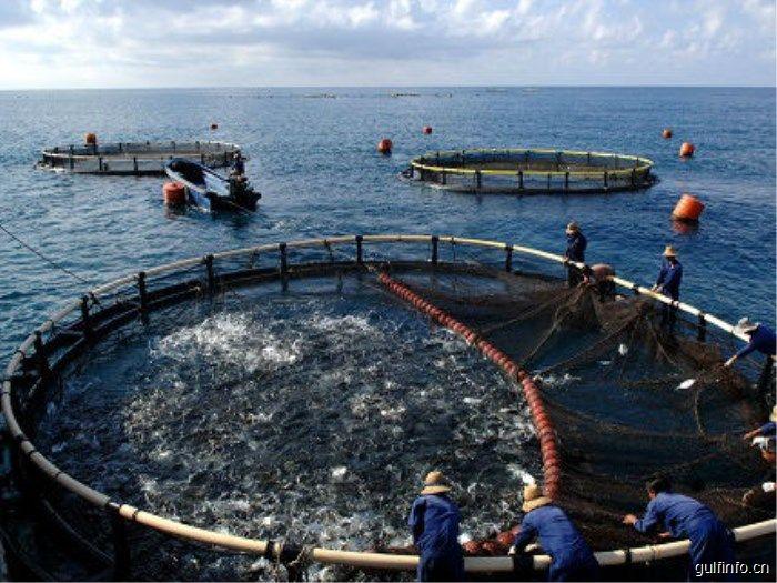 中国鱼类产品占领非洲市场,罗非鱼最受欢迎