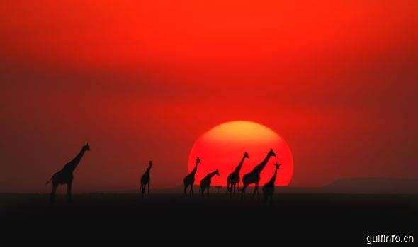 肯尼亚欲加大力度吸引中国游客