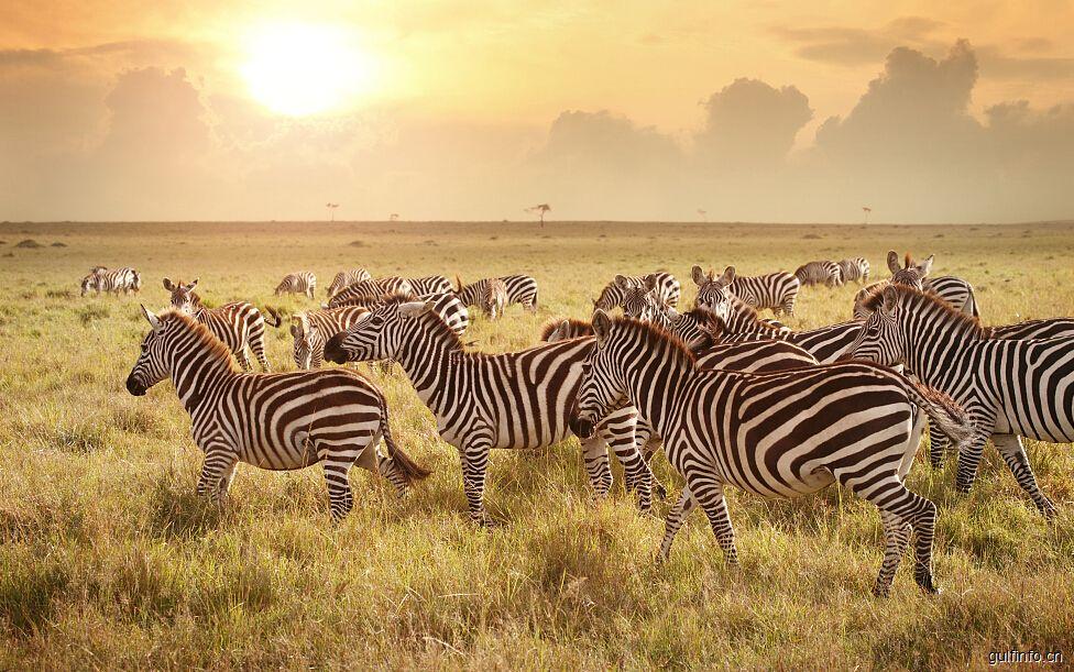暑期中东非热门线路同比暴涨200% 肯尼亚最受欢迎