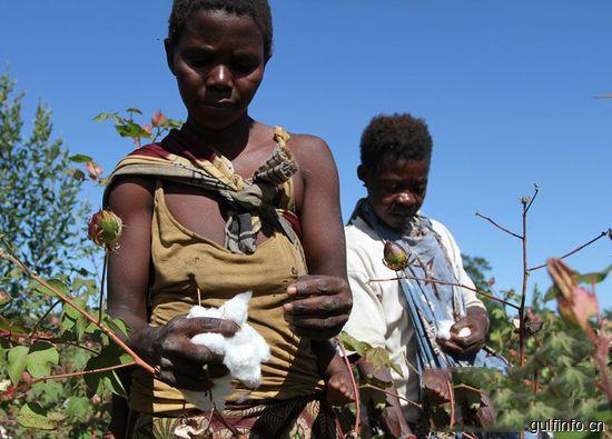 中非棉业<font color=#ff0000>合</font><font color=#ff0000>作</font>帮助非洲朋友有房有车富起来