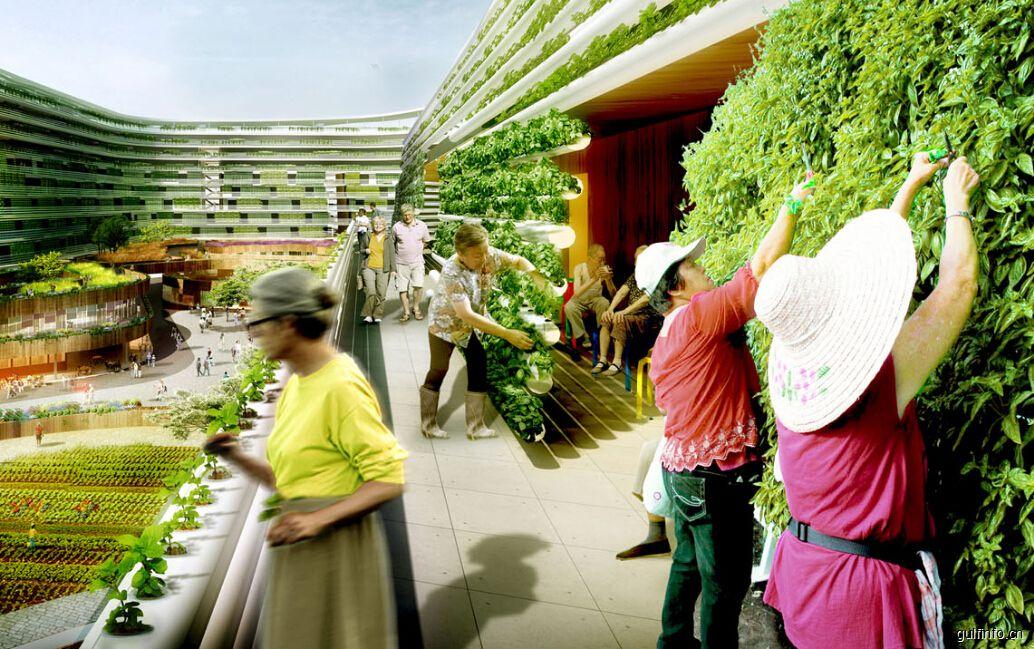 阿联酋拟建设全球最大的垂直农场