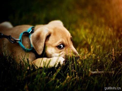 阿联酋新法规规定,遗弃宠物将面临罚款和监禁