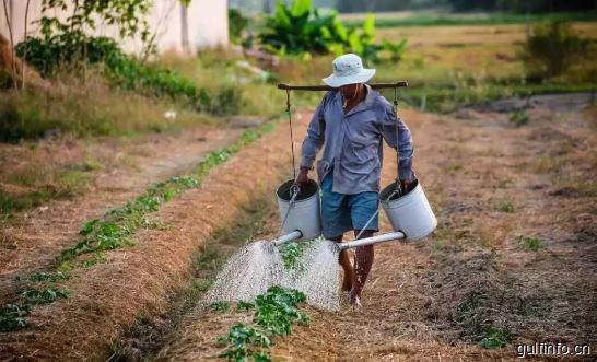 中国人远赴非洲种菜,竟然赚得盆满钵满!