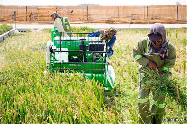 粮食安全——阿联酋的挑战和应对