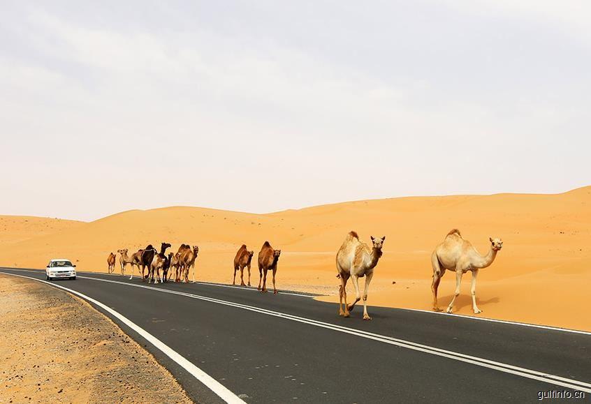 """阿联酋在""""一带一路""""沿线国家中经济指数位列前十"""