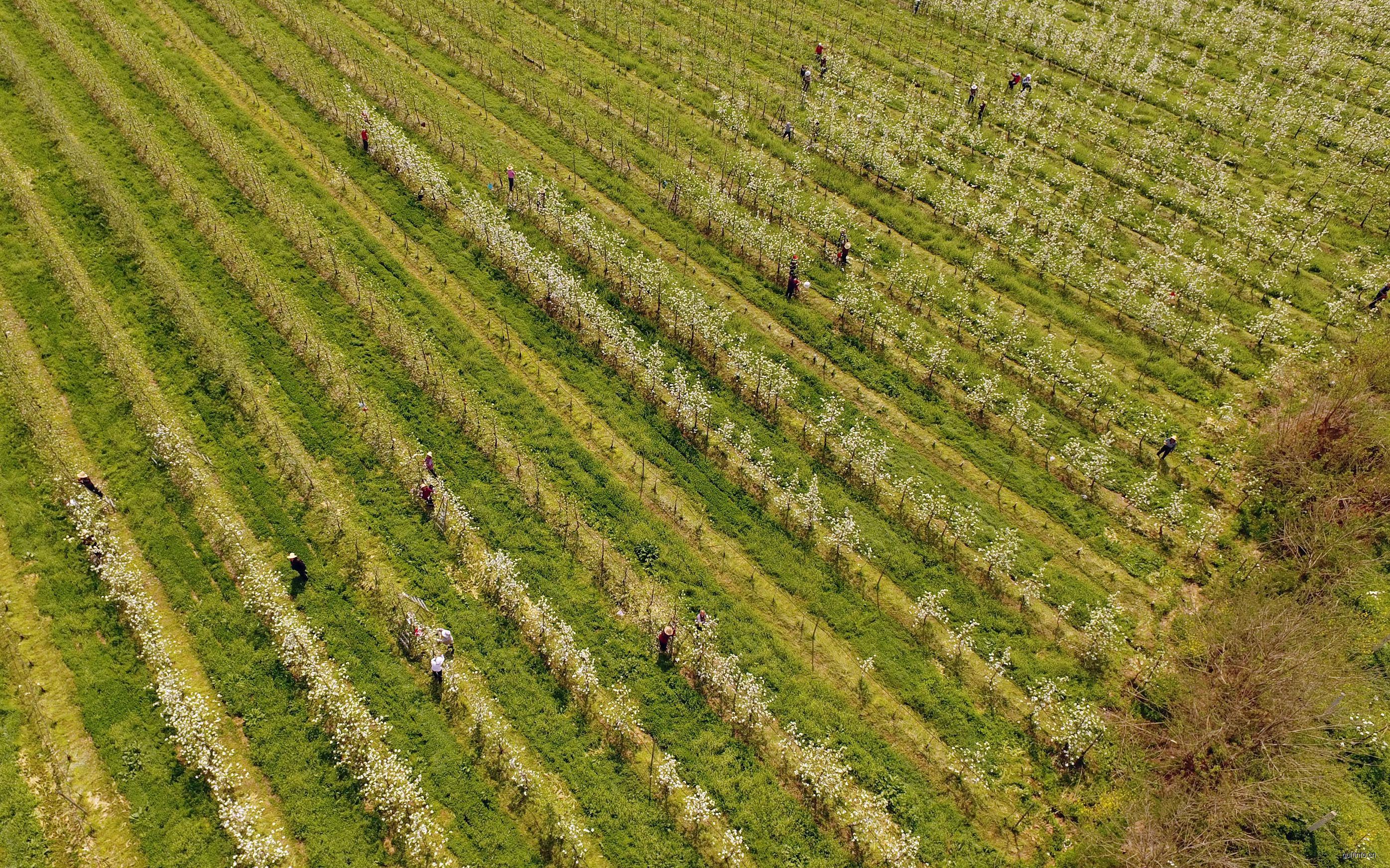 伊朗农业发展现状与展望