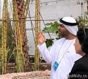 阿联酋农产品进口情况