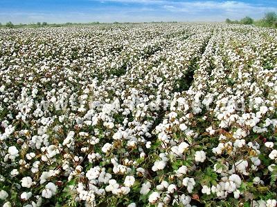 巴基斯坦:采后技术对农业发展至关重要