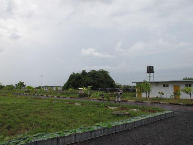 加纳农业发展遇瓶颈,需外来投资